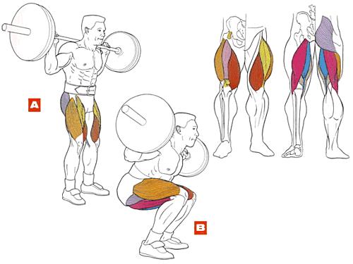 Как нарастить функцианальные мышцы